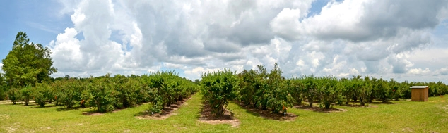 Blueberry Heaven Orchard